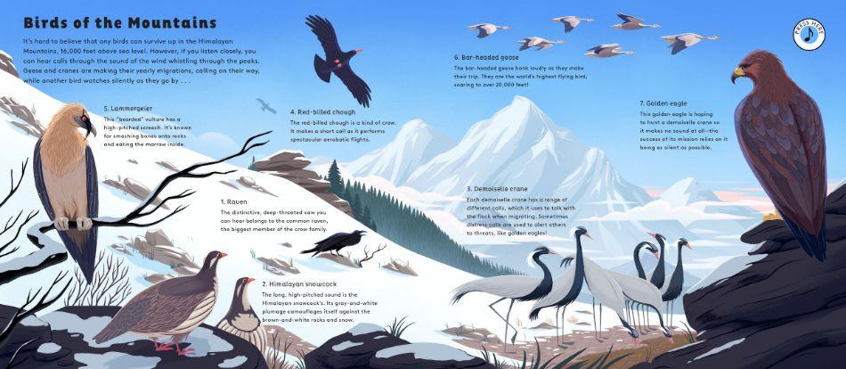 Bird Layout
