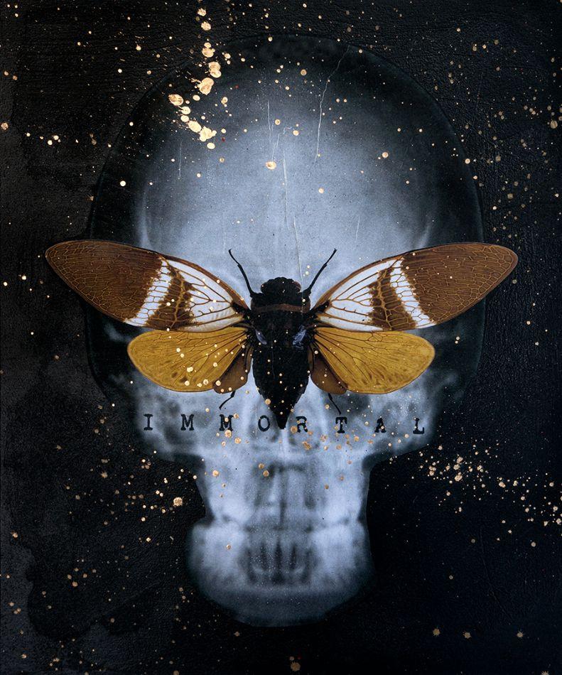 Moth by Acool55