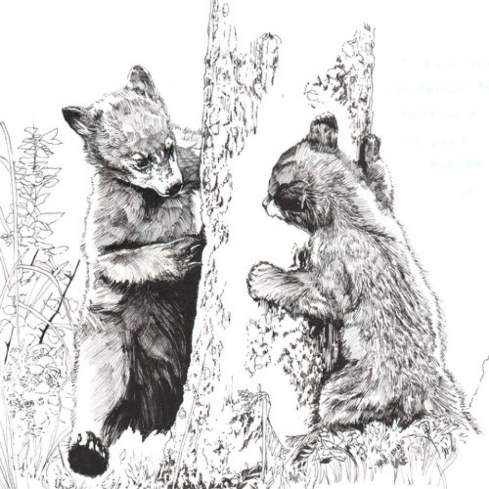 Bears by Bonnie Class