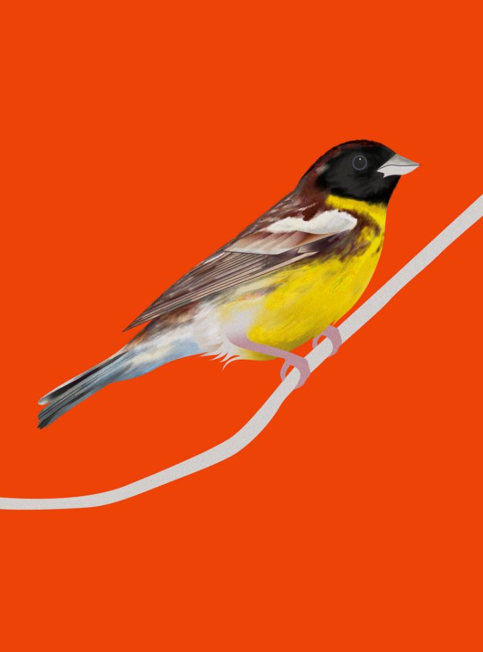 Bird by Sofia Pusa