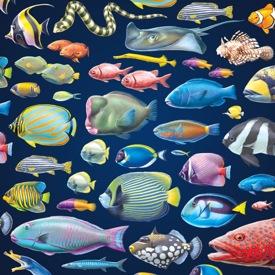 Fish by Tom Conell