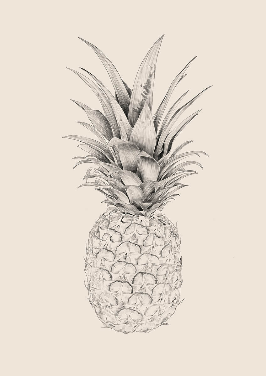 SA_FruitSeries_Pineapple_Portfolio