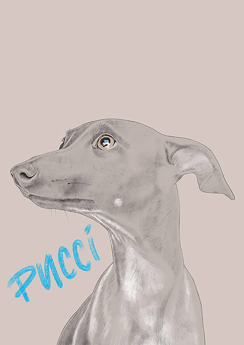 SA_Illustration_Pucci_Portfolio