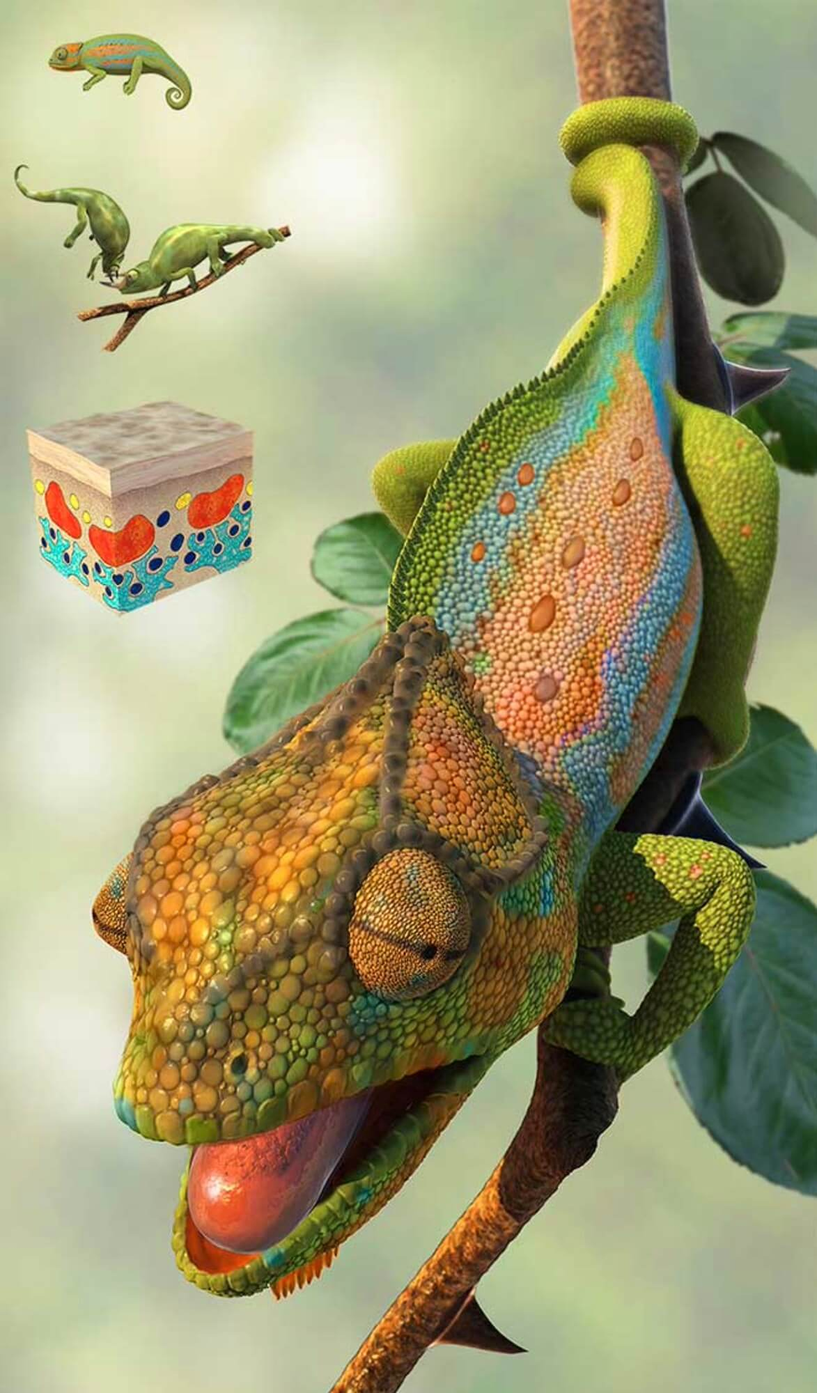 Chameleon by Barry Croucher